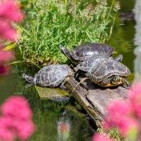 Schildkröten-Asyl am Düsseldorfer Flughafen