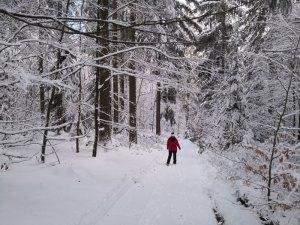 Bodenmais Waldspaziergang ©Laurenti