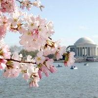 Neuer kostenfreier Reiseplaner für die Hauptstadtregion der USA