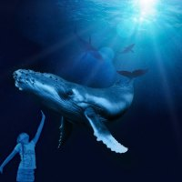 "Das Palma Aquarium präsentiert ""Giganten der Ozeane"""