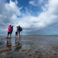 UNESCO-Weltnaturerbe Wattenmeer erleben