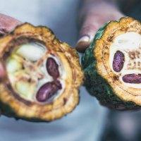 Mit Kakao durch die Welt – Von Brasilien über Vietnam bis nach Australien