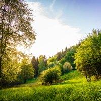 Ein essbarer Wildpflanzenpark, mehr als ein Kräutergarten