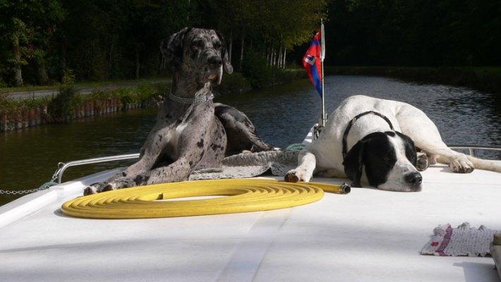 Hunde an Bord ausdrücklich erwünscht
