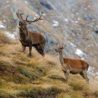 Trentinos Nationalparks zur goldenen Jahreszeit