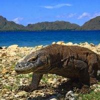 Komodo-Nationalpark nur noch etwas für Reiche – 1000 US-Dollar Eintritt ab Januar 2021