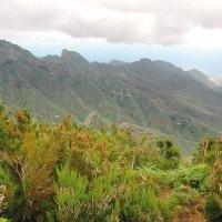 Die heilsame Kraft der Natur: Waldbaden auf den Kanarischen Inseln
