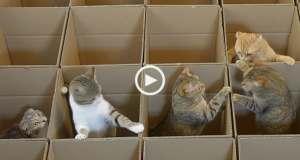 Gatos no paraíso