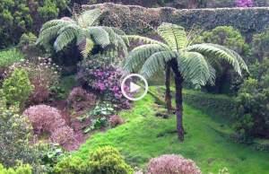 maravilhosos jardins dos Açores