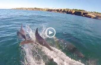 Fabuloso! Golfinhos em Cascais!