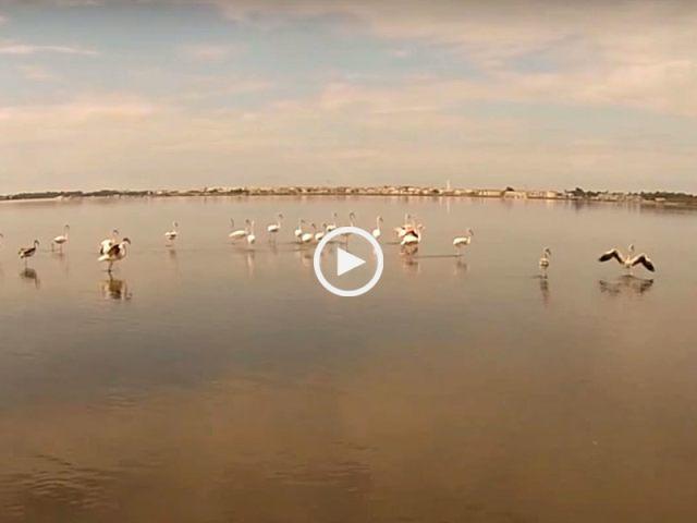 Flamingos na Ria de Aveiro