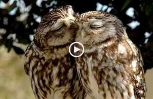 O Amor paira no ar