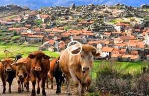 Trás-os-Montes, o Reino Maravilhoso