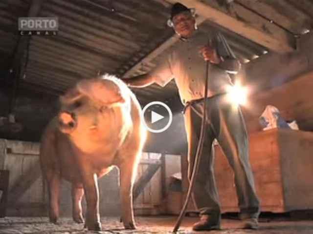 Maior Porco