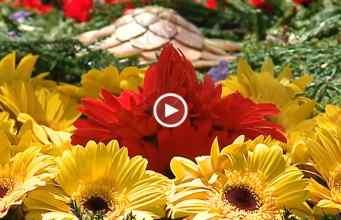 Festa da Flor 2017