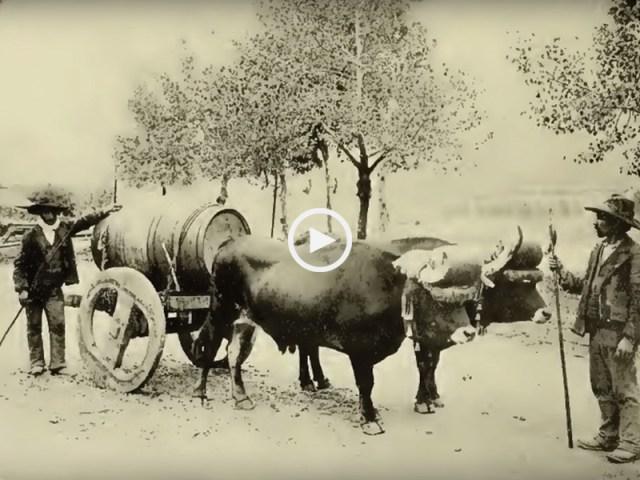 Portugal 1907 'Dulce Pontes'