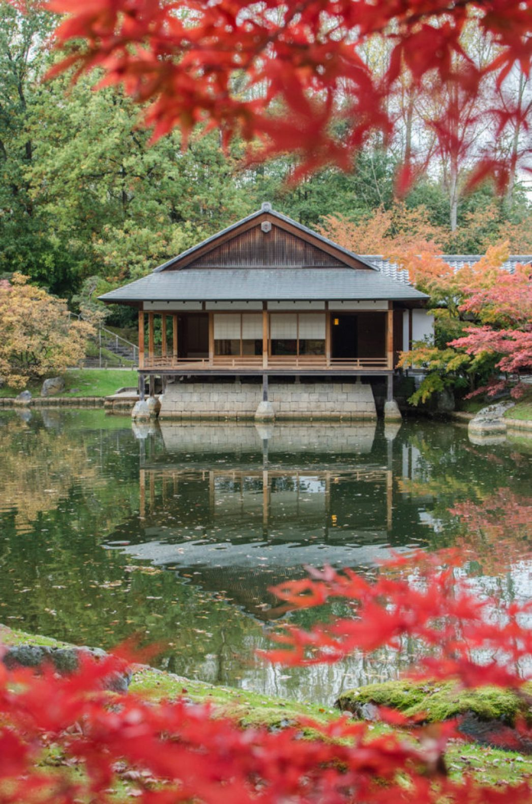 Do you know that Belgium hosts the largest Japanese garden in Europe? It is the Japanese garden of Hasselt, in the Flemish province of Limburg.