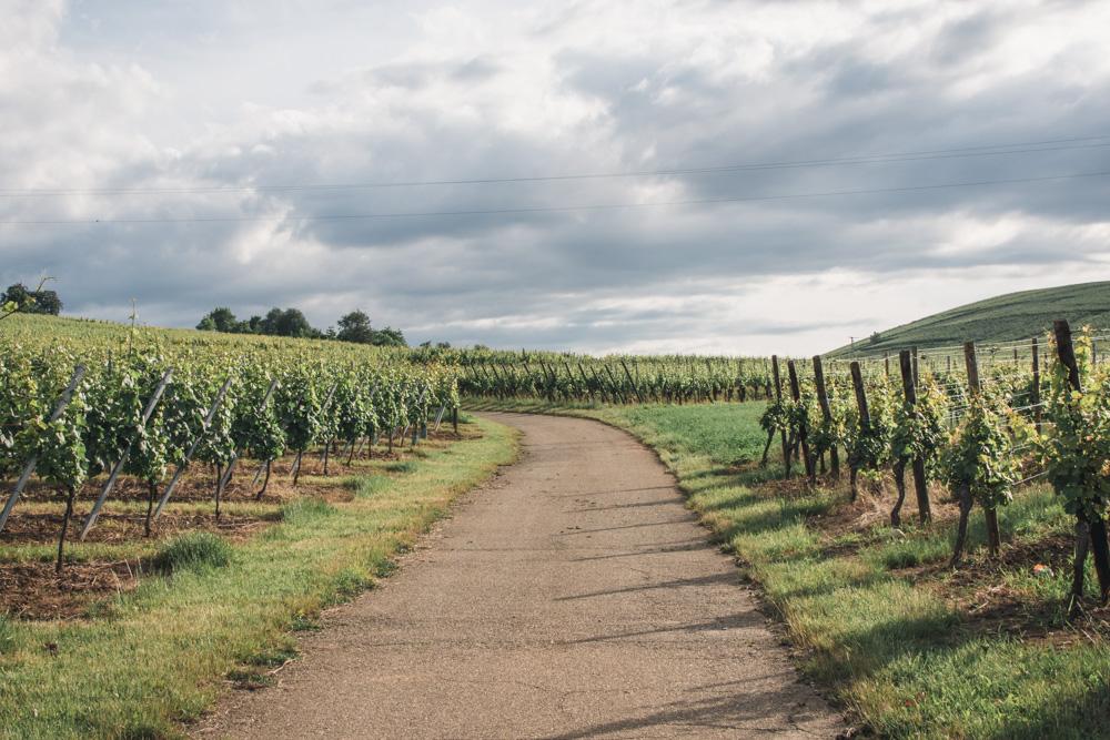 Během loňského výletu spojeného sdegustací vína jsme měli možnost objevit kouzelné Alsasko. Zde je trocha inspirace, pokud hledáte tipy, co tu navštívit.