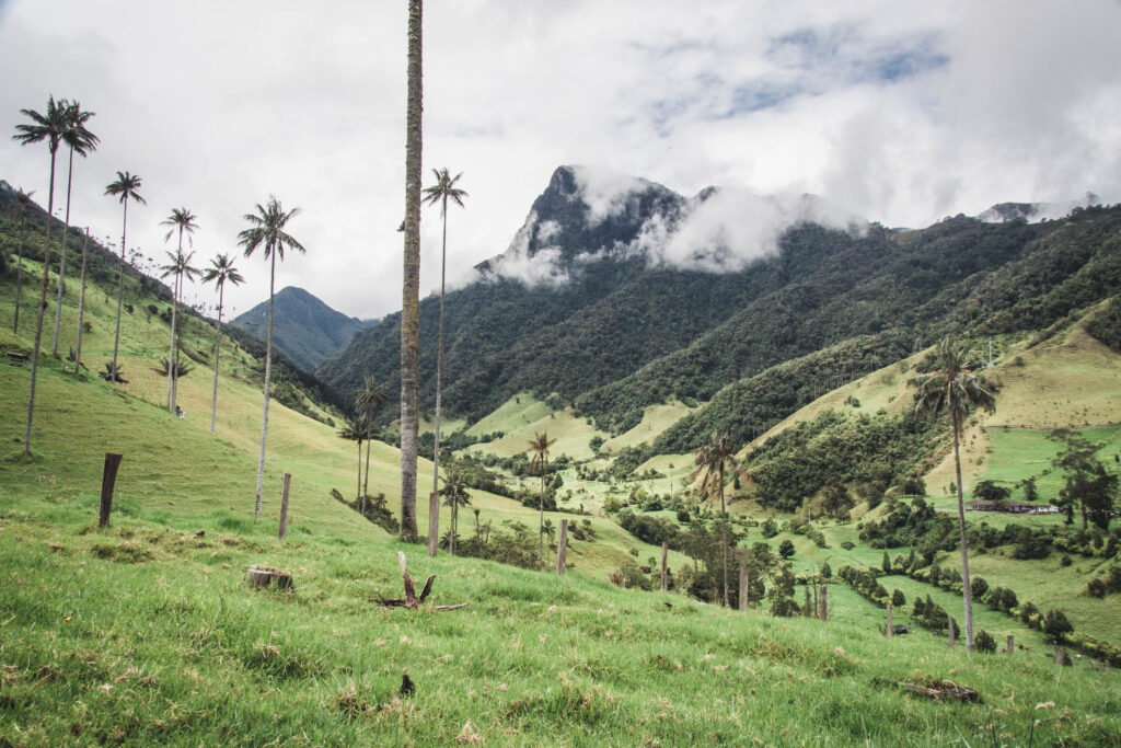 Hiking in the stunning Cocora Valley National Park among the tall wax palm trees reaching the clouds is a MUST DO activity when you are in Colombia!