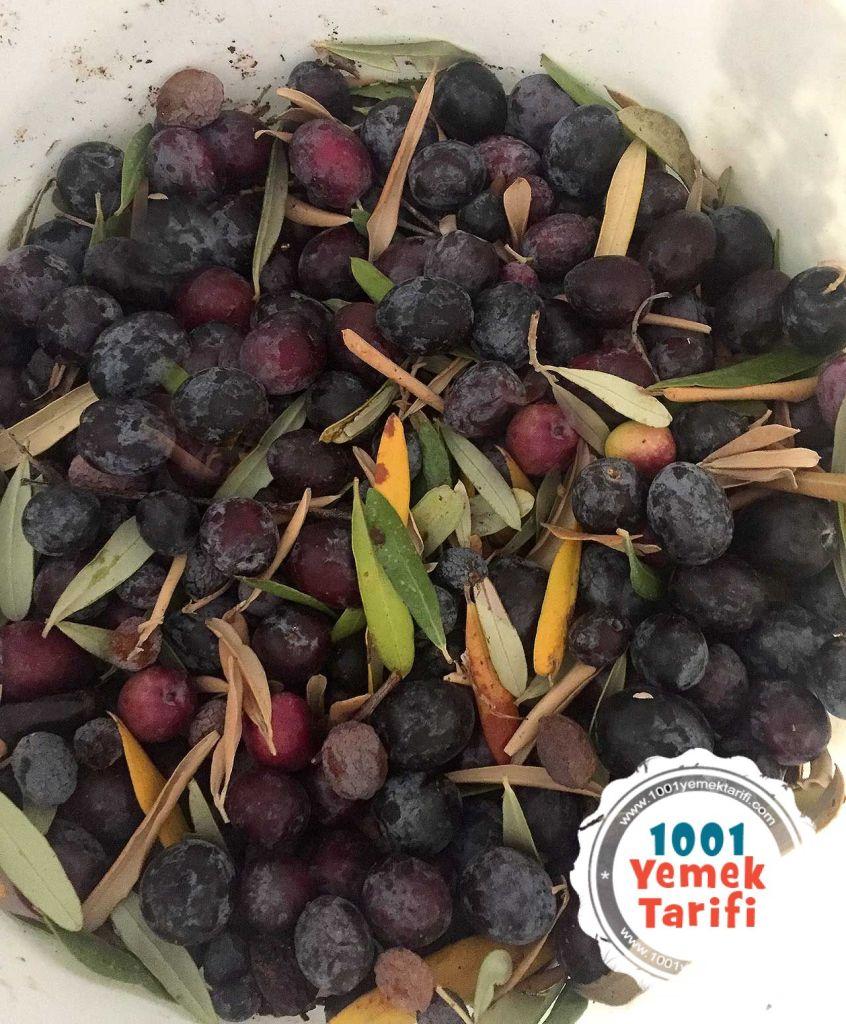 Siyah Zeytin Nasil Yapilir-Evde zeytin yapimi kac kalorikolay-evde ev yapimi organik