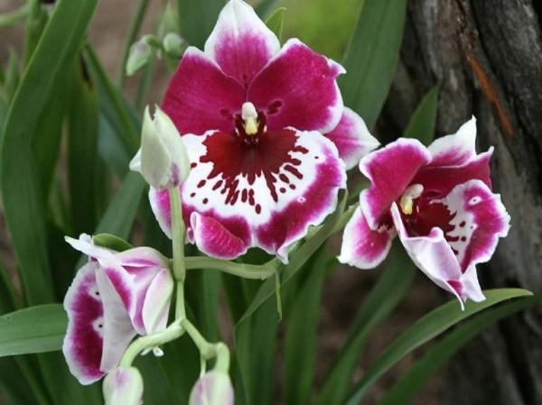 Все виды орхидей с названиями, фото и описанием: от А до Я