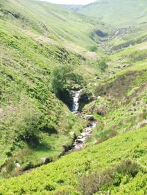 A photograph of a trickling stream