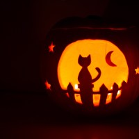Cat Moon Gazing Pumpkin 2014