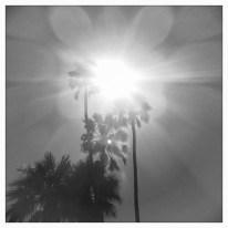 palm tree sunlight