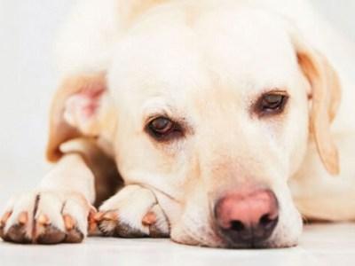 cachorro-cancer-animais-brasil