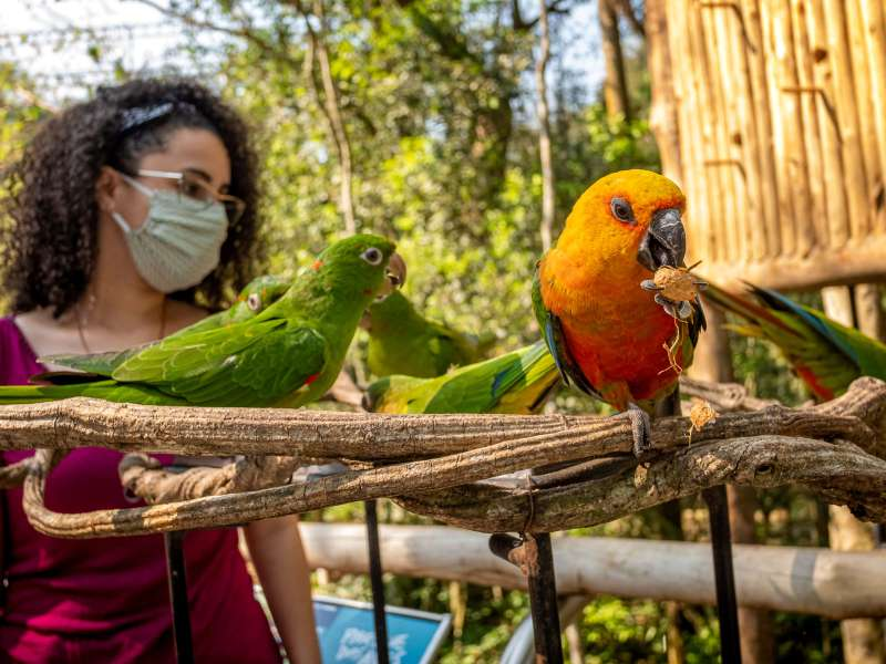parque-das-aves-periquitos-passaros-foz