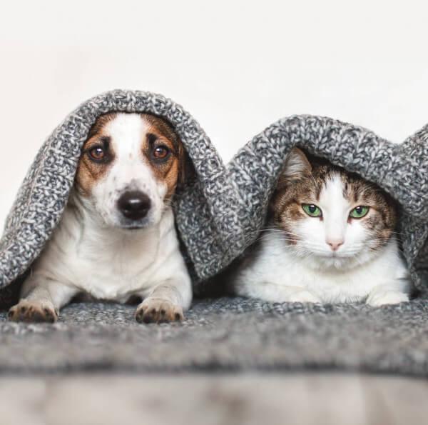 cao-gato-cuidados