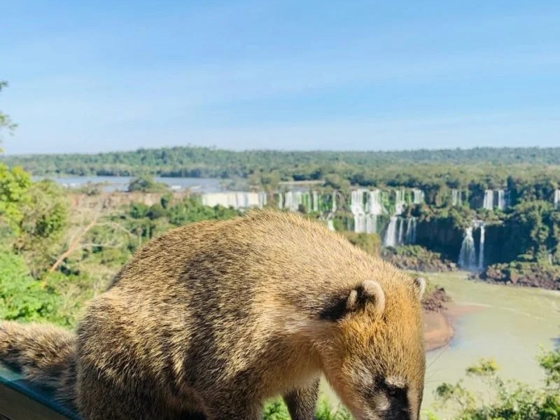 Foz do Iguaçu quer ALEP e Congresso Nacional atentos na concessão do PNI