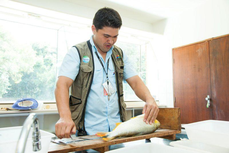Estudo propõe protocolo para abate humanitário de peixes