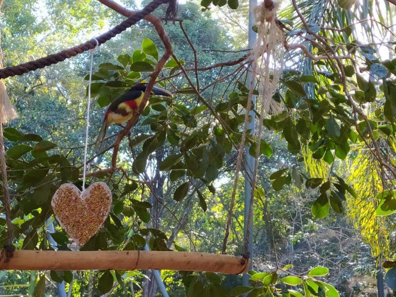 Aves refúgio biológico ganham almoço de dia dos namorados
