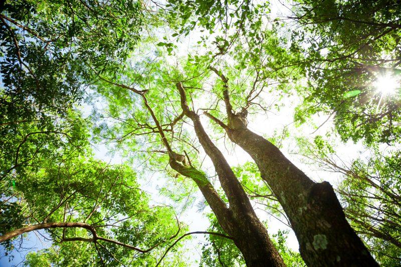Biodiversidade Itaipu Binacional