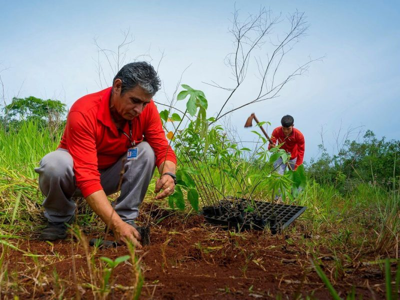 plantio-24 milhões-árvores-itaipu-foz-cidade