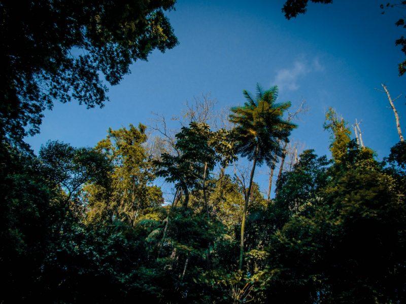 Concessão Florestas ABNDES