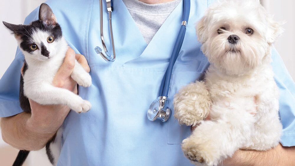 gato-cachorro-médico-castração