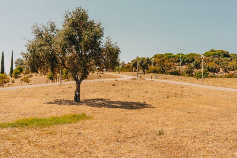 Parque Bela Vista Lisboa -World News Day