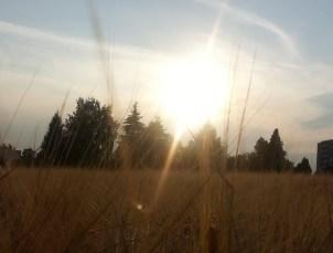 bilder_08_harvest2