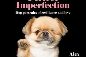 BOOK REVIEW: Perfect Imperfection – Dog Portraits Of Resilience And Love by Alex Cearns