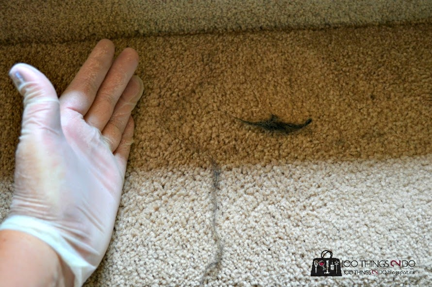 How to remove pet hair from carpet - this is what was left even after vacuuming!