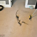 How to remove pet hair from carpet