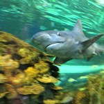 Toronto - tour the Ripley's Aquarium
