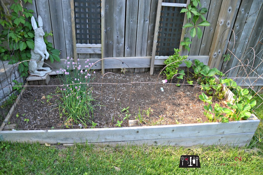 how to keep cats out of the garden. How To Keep Cats/pests Out Of Your Garden Cats The