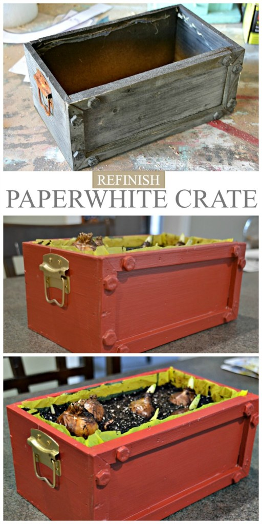 Paperwhites Crate