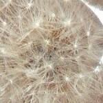 Dandelion paperweight, epoxy paperweight, resin dandelion, resin crafts