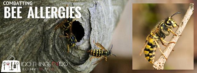 Bee allergies, venom immunotherapy, anaphylactic allergy, bee stings, venom shots, VIT, yellowjacket, bee stings