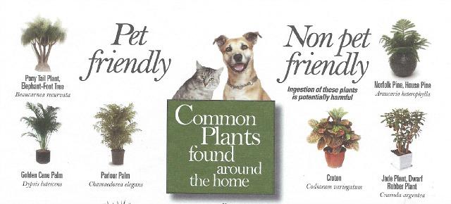 Pet-friendly plants, toxic plants for pets, dangerous indoor plants