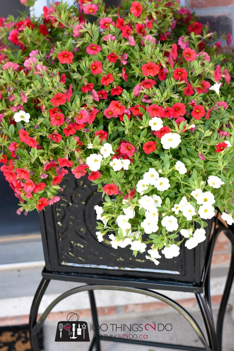 Metal planters, rusty planters, planter makeover, black planter, front porch planters, Rustoleum